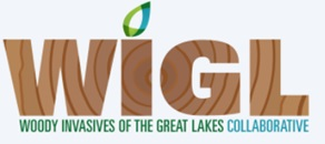 Woody Invasives of the Great Lakes